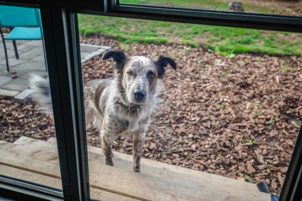Seattle Home Buyer Stories: The furbaby, Norman of Highland Park