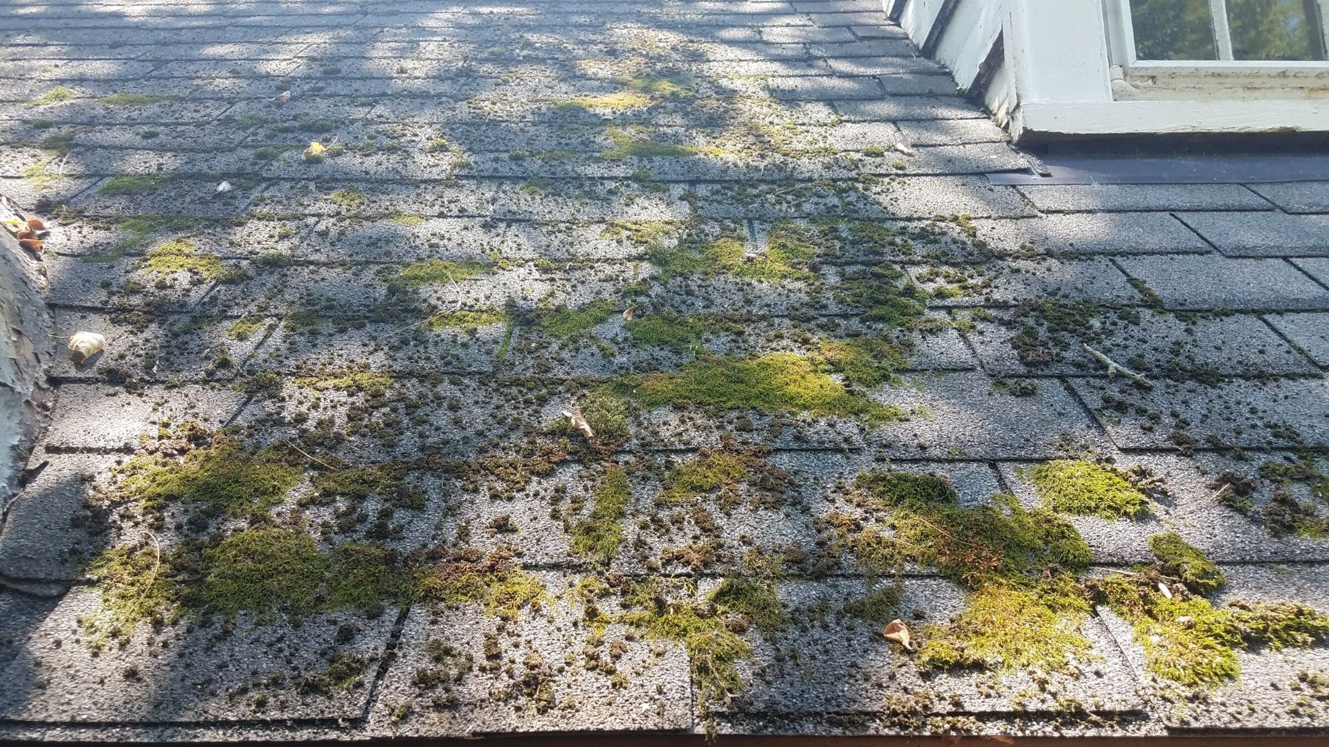 moss on roof should be cleared before home inspection