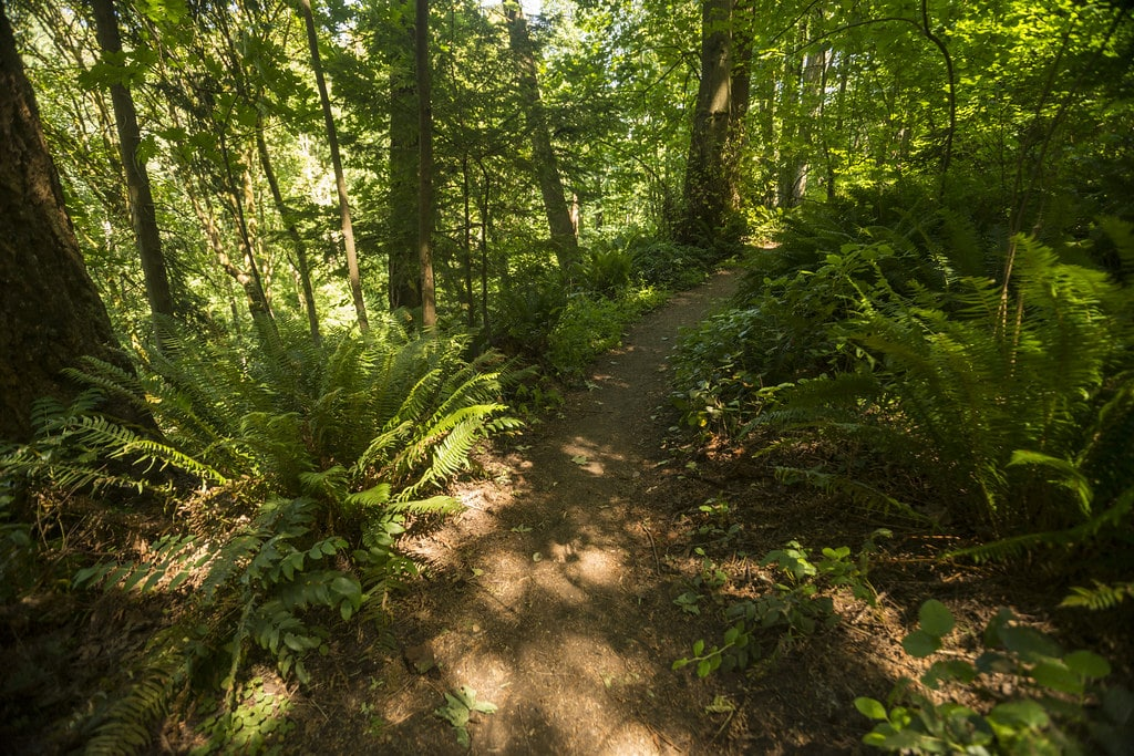 Fauntleroy Park Trail